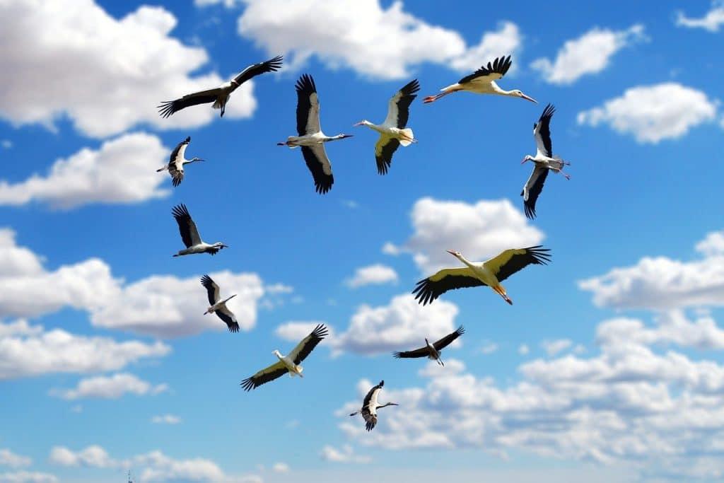 Birds flying in heart shape